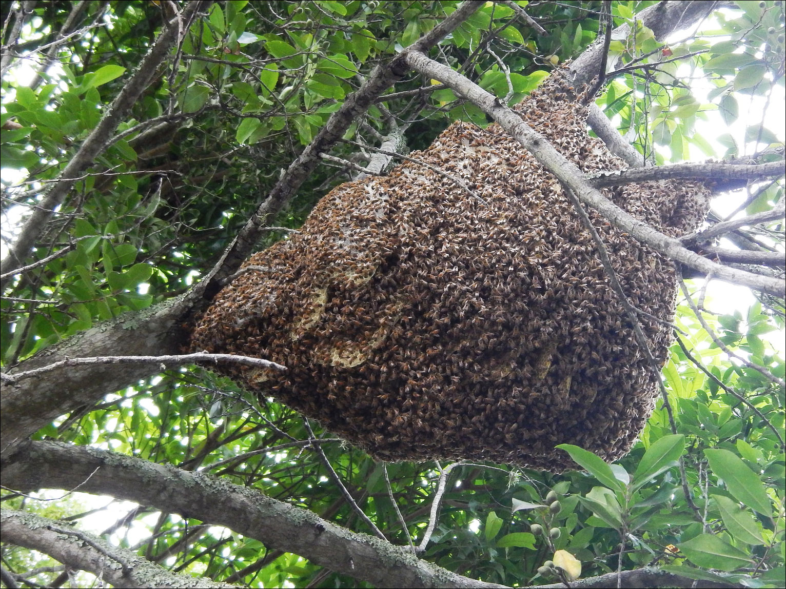 Honey Bee Removal | M M  Bees